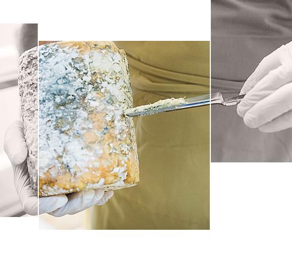 Afinado de quesos artesanos